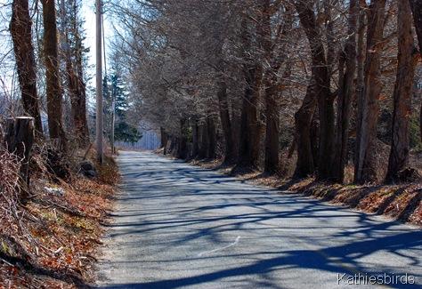 5. country road-kab