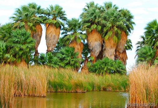 1. Palms-kab