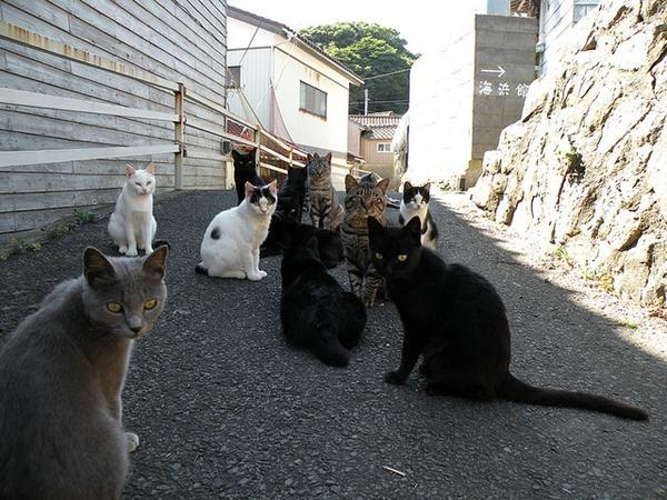 Cats – Tashirojima, Japan