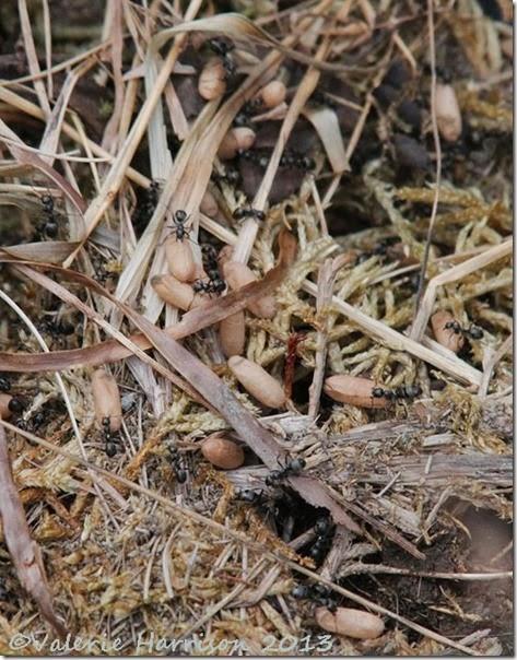 28-ants