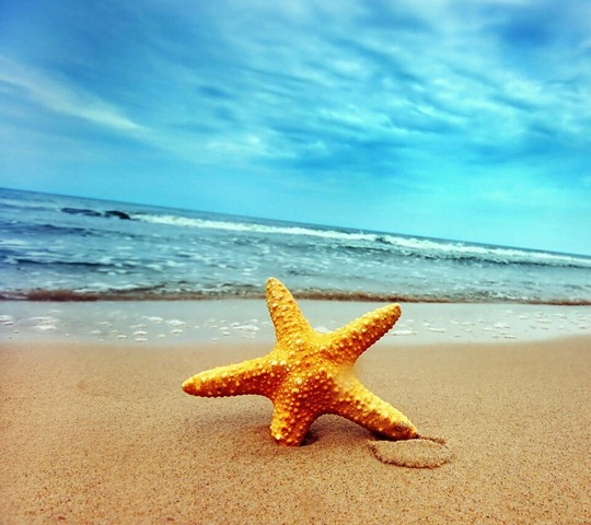 Sunk Starfish _33571693