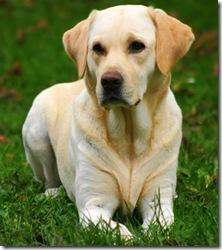 Cronograma de septiembre de esterilizaciones quirúrgicas gratuitas para caninos