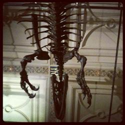 Dinosaur Natural History Museum