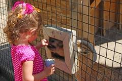 rylee zoo feeding goats