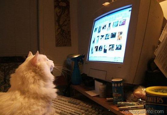 gatos en ordeandor  (2)