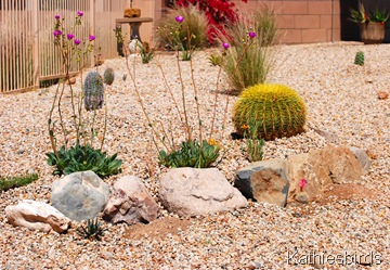 2. cactus garden-kab