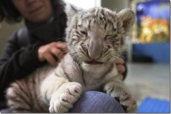 cute-baby-animals-36