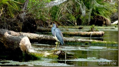 Chassahowitza River canoeing_153