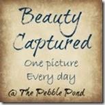BeautyCaptured3final_zpsd17041a2