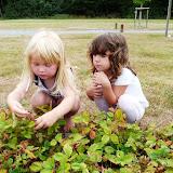 Silje og Sofia har kastet sig over skovjordbærerne