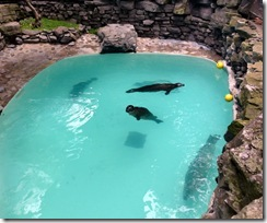 Aquarium of Niagara seals