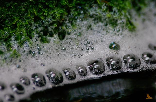 vannbobler