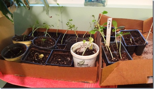Planting 04282012