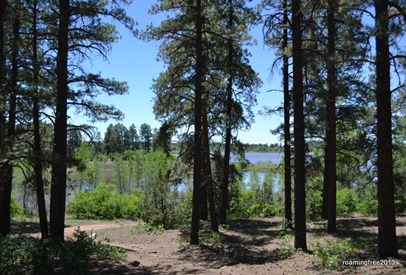 Ponderosa Pines around Summit Lake