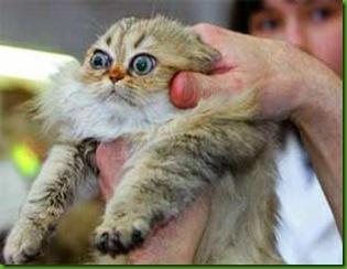 cat-pill