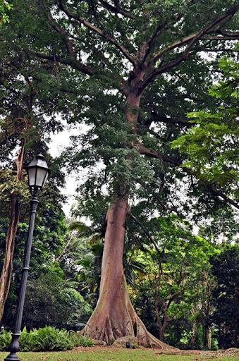 Merveilleux Silk Gardens And Trees Garden Designs