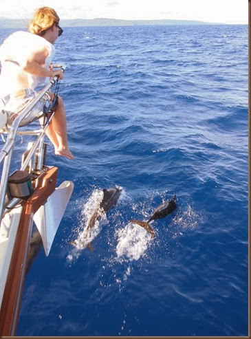 sailing siargao island dolphins at the bow 1