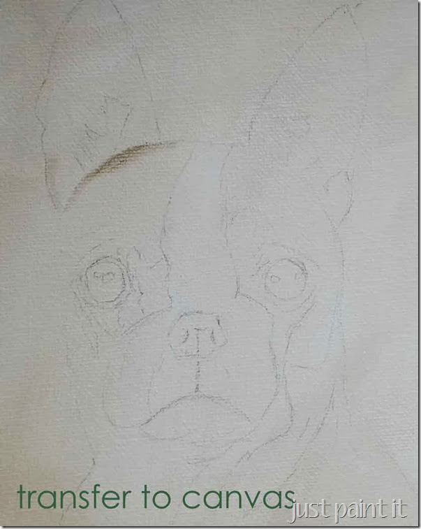 boston-terrier-sketch-C