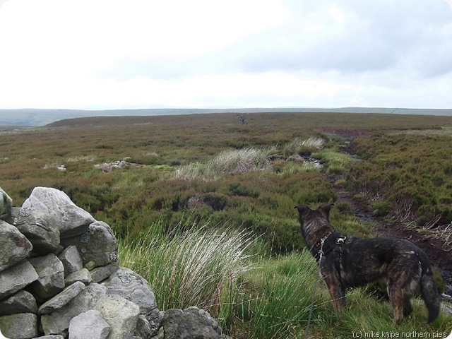 bruno spots pennine wayfarer ahead. maybe he has cheese..?