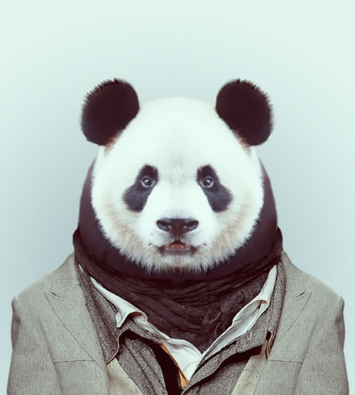 animais roupas humanas - Panda