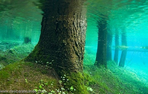 Green Lake parque submerso austria desbaratinando (4)