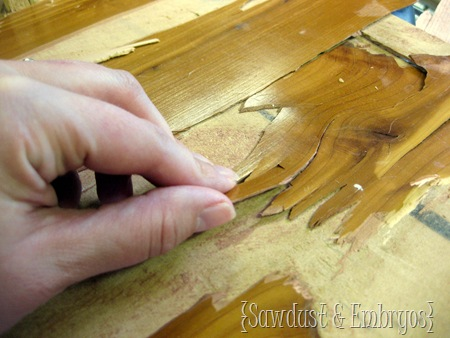 The difference between veneer and laminate {Sawdust and Embryos}