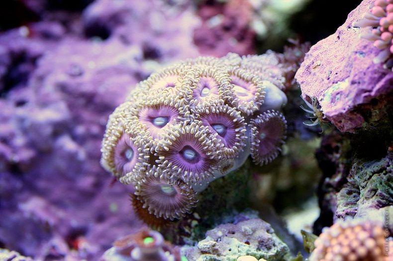 corals-3