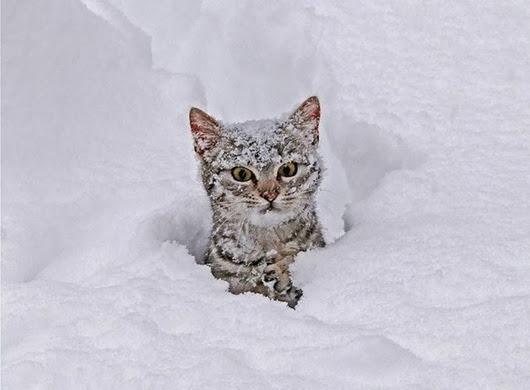 cat-snow-1