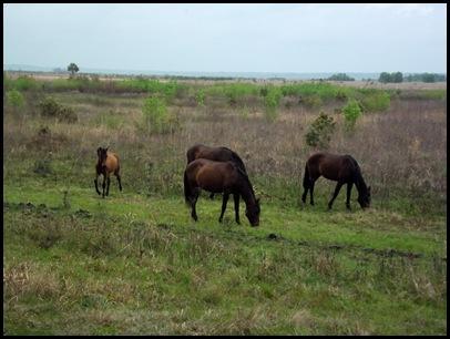 PM horses 042