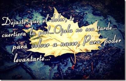 amoramor00 imagenes fraes amor (144)