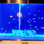 cool aquarium at a local shibuya restaurant in Shibuya, Tokyo, Japan