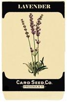 seedpacketlavender-graphicsfairy008b4sm