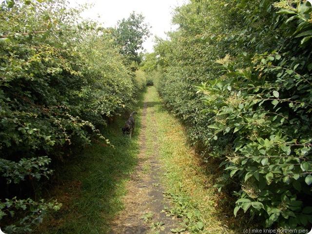 aap path 49 003