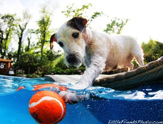underwater-dogs-puppie