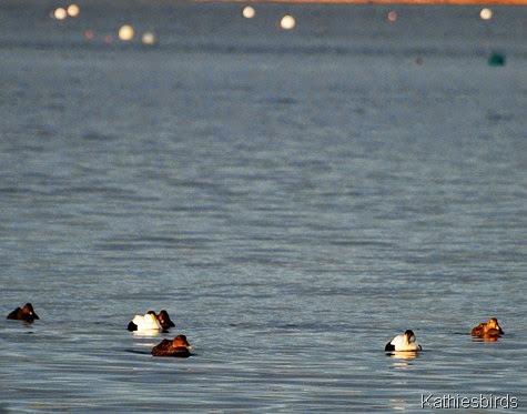 5. bouys and ducks-kab