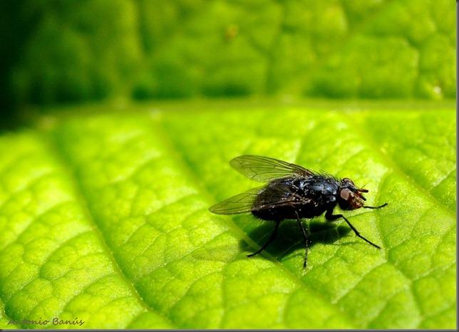 Aprendiendo con la vista buscando insectos en el jardin for Insectos del jardin