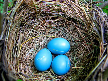 untitledblue eggs