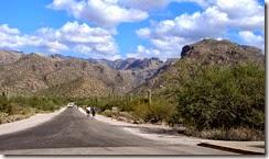 Tucson Sabino Canyon 002