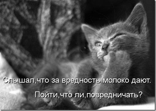 kotomatritsa_Gb