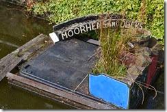 5 little moorhen island