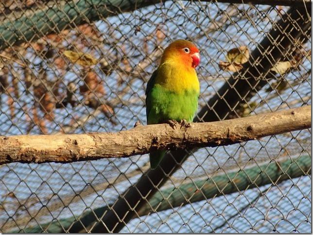 Santiago_Zoo_DSC03786