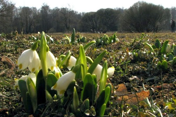 снять зимний стресс поможет весенняя экотерапия: http://ecotherapy.ru