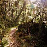 The Sub-Tropical Rain Forest - Karamea, New Zealand