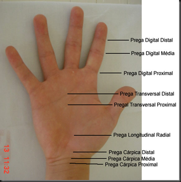 Avaliação Fisioterapêutica do Punho e da Mão.pdf - Adobe Reader