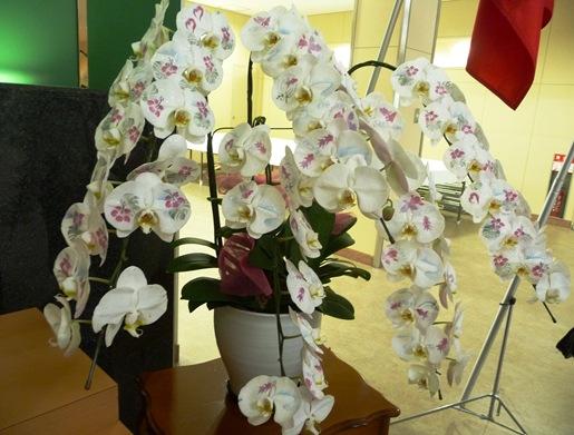 Gloria Ishizaka - PL 2011 -  orquidea decorada com pinturas