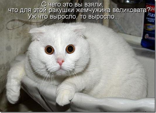 kotomatritsa_5