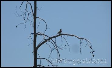 MarshWren Singing