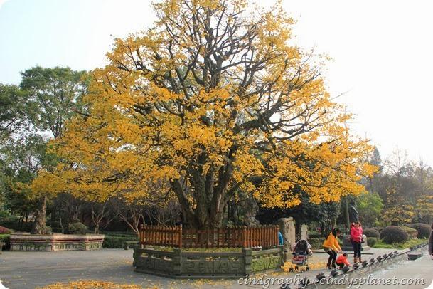 Chengdu69
