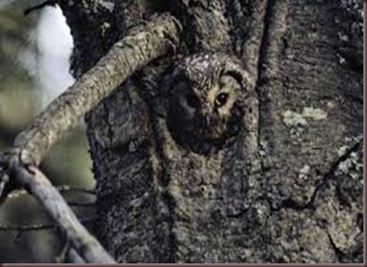 Amazing Pictures of Animals Camouflaged Animals (6)