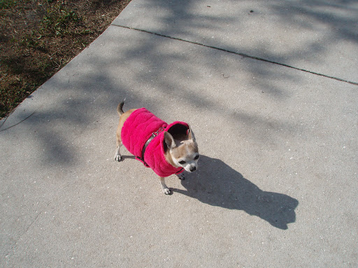 Rescued Malina loves her pink velour parka and it keeps her toasty warm.  She wishes other pups awaiting homes in shelters could be this warm!